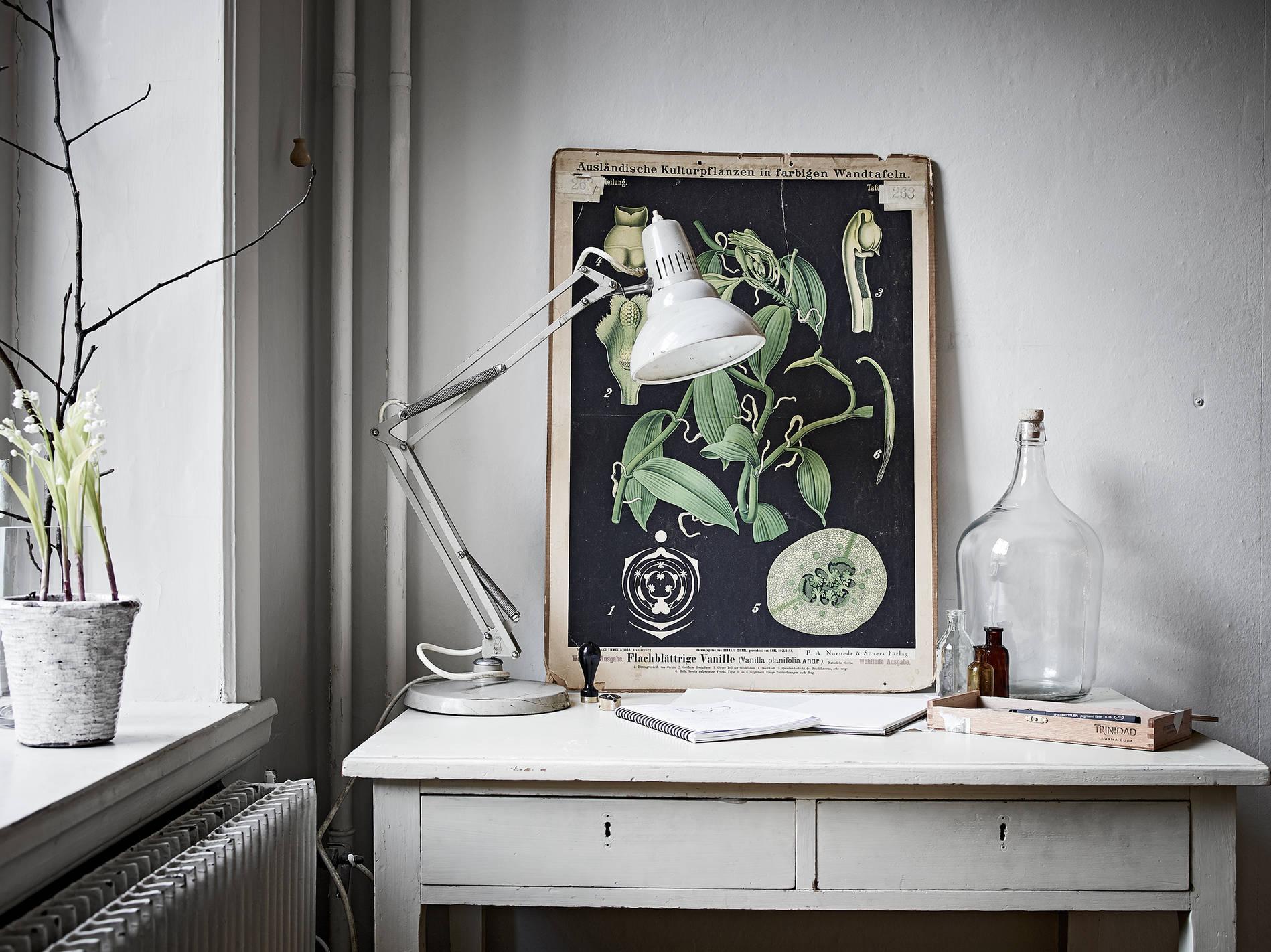 affiche_ancienne_planche_plante_botanique