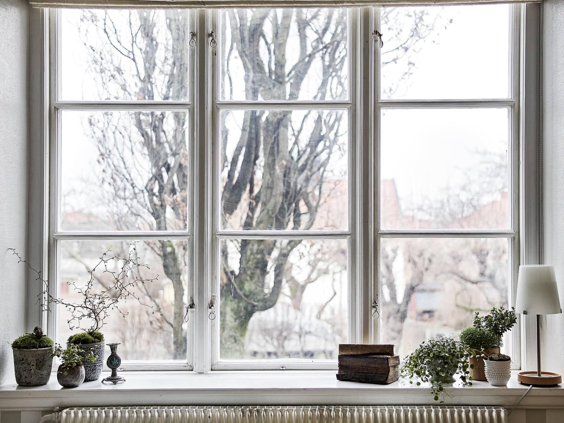 ambiance_simple_plante_fenêtre