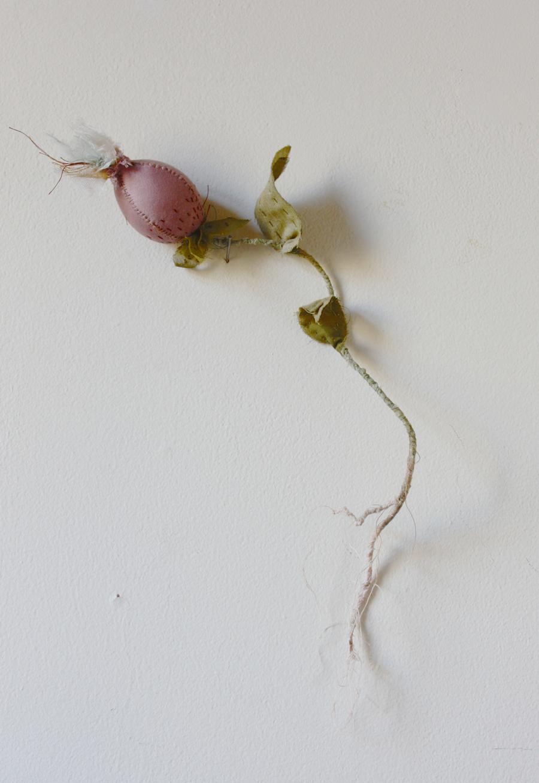 botanical_seedpod